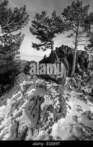 Black and White, Rocky Mountain National Park, winter, Landscape, snow, - Stock Image