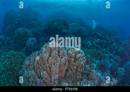Female scuba diver explores coral mountains in the Red Sea. September, 2018 - Stock Image