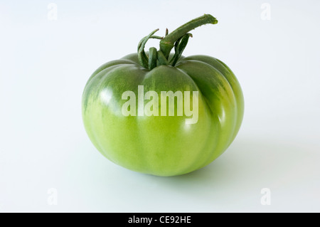 Tomato (Lycopersicon esculentum), green fruit. Studio picture against a white background. - Stock Image