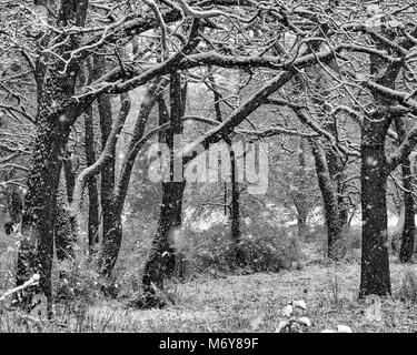 Beacon Hill Park in Victoria, B.C. - Stock Image