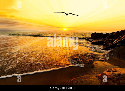 Sunset ocean bird silhouette is a bird flying with wings spread flying toward the light of of freedom and inspiration - Stock Image
