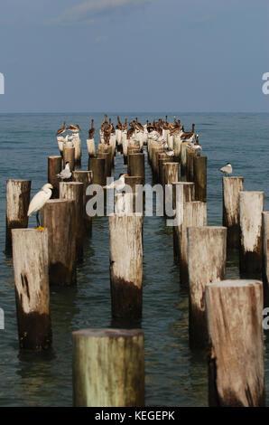 Coastal pier and birds Florida - Stock Image