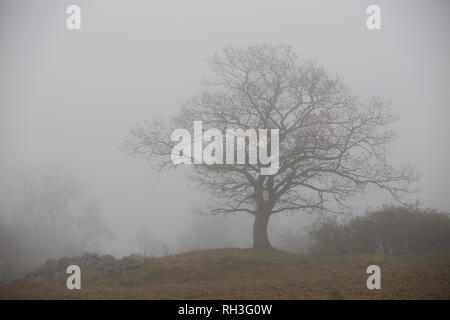 Silhouette of tree in fog - Stock Image