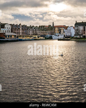 Houseboats, river barges and historic buildings with solitary swan in light on water, The Shore, Leith, Edinburgh, Scotland, UK - Stock Image