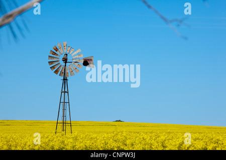 Windmill and canola crops. Eyre Peninsula. South Australia. - Stock Image