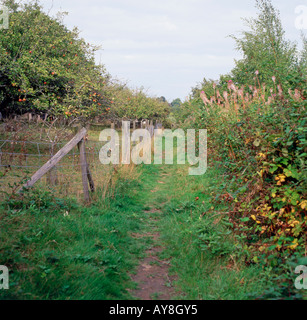 An old track passing through an apple orchard on a farm in autumn in Brenchley Kent England UK  KATHY DEWITT - Stock Image