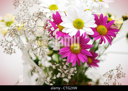 pink and white daisy flowers - Stock Image