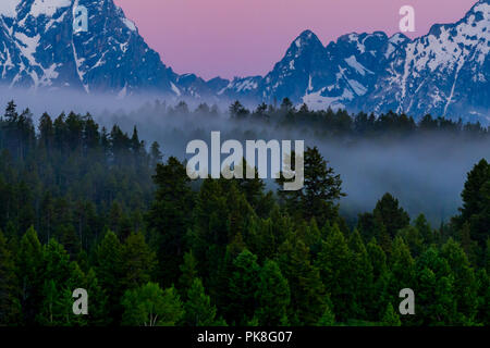 Fog Wanders in and out of line of trees with pink sky and Tetons range - Stock Image