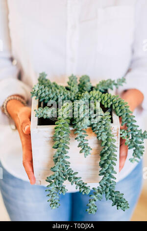 Close up of wcaucasian woman's hands taking a green plant - environment and nature protection and care concept - decorations at home - Stock Image