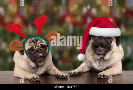 funny cute Christmas pug puppy dogs leaning on wooden table, wearing santa claus hat and reindeer antlers, with seasonal background - Stock Image