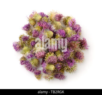 Top view of dried cotton thistle flowers isolated on white - Stock Image