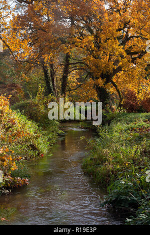 River Wey in autumn feeds the former watermill at Elstead, Surrey, England - Stock Image