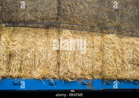 Heavy trailer truck loaded with straw bales. Closeup - Stock Image