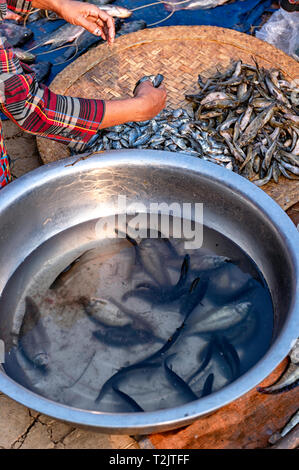 Fish vendor at the Phaung Daw OO market at the Inle Lake in the Shan State in the east of Myanmar in South east Asia. - Stock Image
