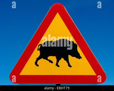 A warning road sign in Sweden for wild boars. Could be used as a concept image for warning of the Swine flu. - Stock Image