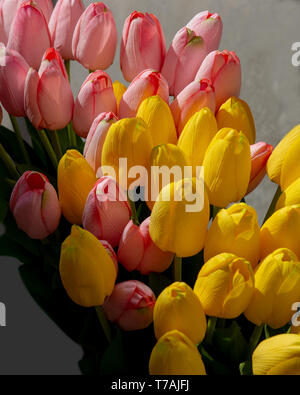Pink and yellow plastic tulips happy festive flowers background and copys space ideal for spring and Easter celebrations - Stock Image