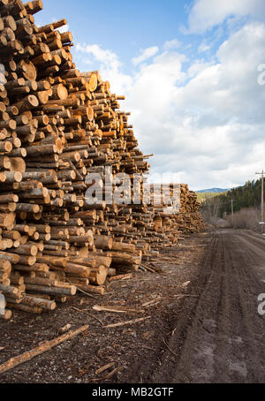 Stacks of pulp grade logs line the mill road, on the yard, at Fodge Pulp Products, in Bonners Ferry, Idaho.   Fodge Pulp Products is a pulp wood proce - Stock Image