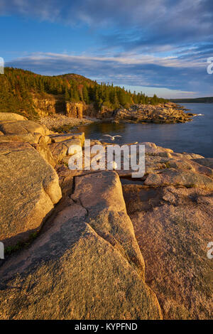 Sunrise with gulls at Monument Cove in Acadia National Park in Maine - Stock Image