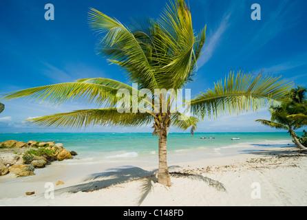 Tree on Caribbean beach. - Stock Image