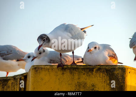 Seagulls in the harbor - Stock Image