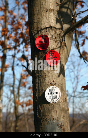 Hiking trail markers posted on a tree, near Cold Spring, NY, USA - Stock Image