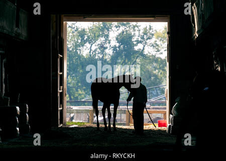 Silhouette of thoroughbred horse being led into stables by trainer in Lexington in Kentucky. - Stock Image