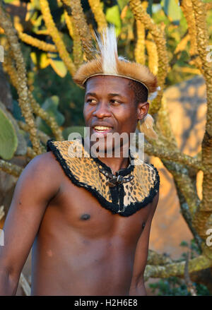 Shakaland Zulu troupe member  in traditional head dress and neck bridle  poses next to trees Shakaland Cultural - Stock Image
