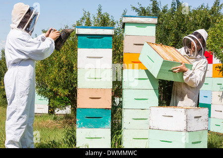 Beekeepers Working At Apiary - Stock Image
