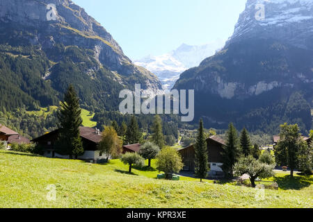 At the foothills of rocky mountains there are meadows, woodland and trees and several houses as seen from Grindelwald - Stock Image
