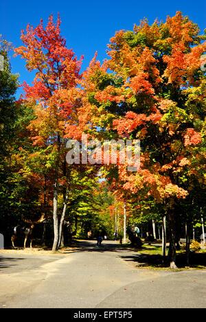 Colourful autumn foliage Canyon Sainte Anne Park near Quebec City - Stock Image