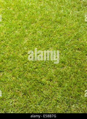 A simple grass background - Stock Image