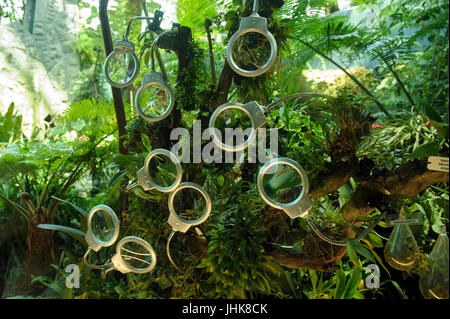 Maginfying glasses provided for viewers to look more closely at orchid flowers. Cloud Forest, Gardens by the Bay, - Stock Image