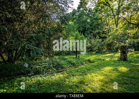 Italy Piedmont Turin Valentino botanical garden -  Tree Grove - Stock Image