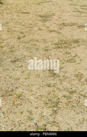 Sun-baked ground / soil during the 2018 Summer heatwave. - Stock Image