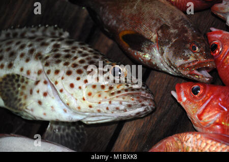 Beautiful tropical fish from the Red Sea, which are caught on bait - Stock Image