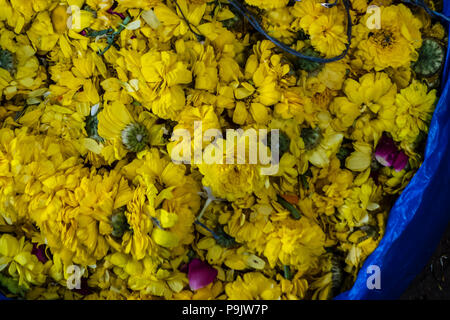 Basket of yellow flowers in a market in India - Stock Image
