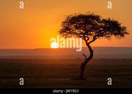 Sunset at the African savannah - Stock Image
