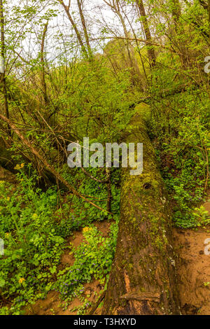 Fallen Tree and Forest - Stock Image