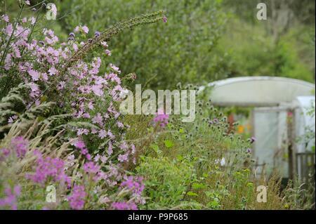 Wild grassland garden, Malva moschata, Muskmallow with Spear Thistle, Greater Burdock, Rosebay Willowherb, Verbena bonariensis and Foxglove, Wales, UK - Stock Image