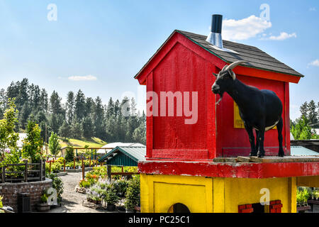 A black British Alpine or Tuggenburg goat stands atop his enclosure. - Stock Image