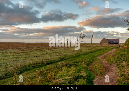 A tree trunk and an old barn in the evening light over the Porlock Marshes, Somerset, England, UK - Stock Image