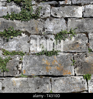 Grey and brown medieval style tile wall with beautiful fresh ivy plants growing on it. Beautiful background texture image with rustic vibes. - Stock Image
