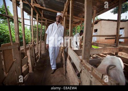 Rwandan butcher and meat producer poses next to his pig pens, Kigali, Rwanda - Stock Image