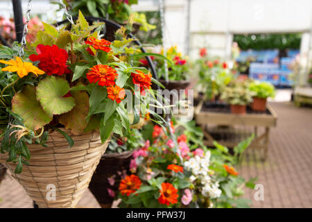 Flowers and plants for sale in a garden centre, Cambridgeshire England UK - Stock Image