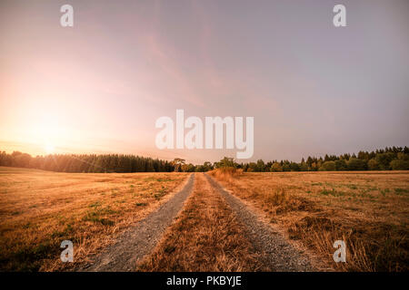 Dirt road in the sunset going to a forest on a summer evening - Stock Image