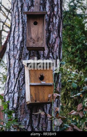 Waldsiedlung Krumme Lanke, Berlin. Bird nesting box , breeding box in suburban garden - Stock Image