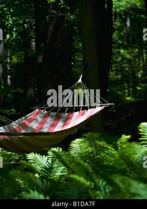 Hammock in woods near Adirondack cabin - Stock Image