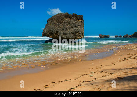 Large rock which was broken away from a coral reef, on Bathsheba Beach; Barbados - Stock Image
