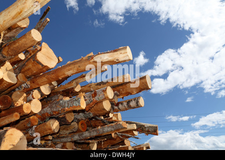 Stacked timber waiting for transport to paper mills. In the background are power lines. - Stock Image