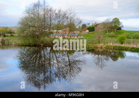 Tree reflecting in the Montgomery Canal in England - Stock Image